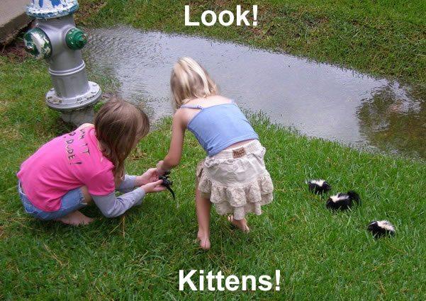 look kittens