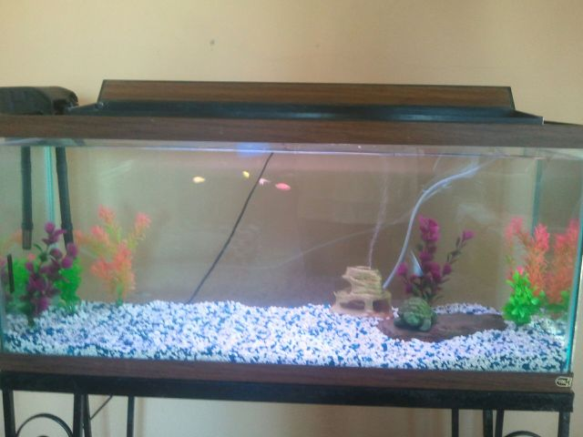 school of fish2