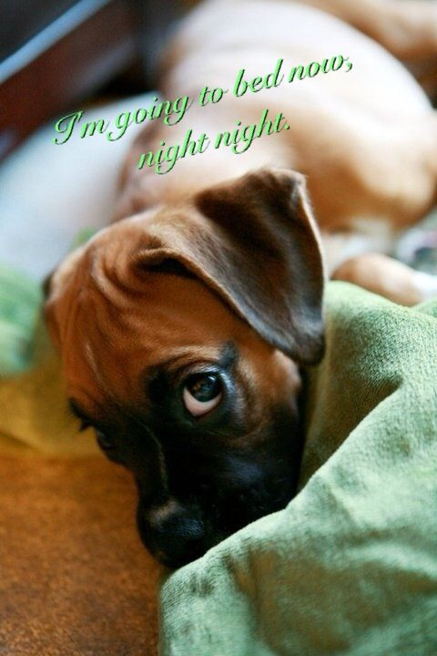 nighty night dog with eyes