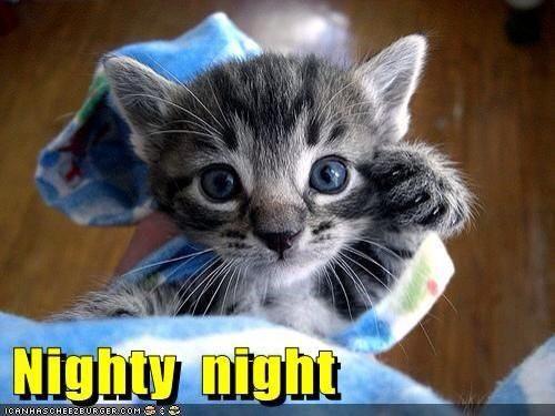 nighty night kitty