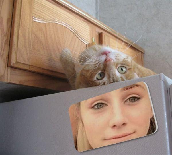 kitty on fridge