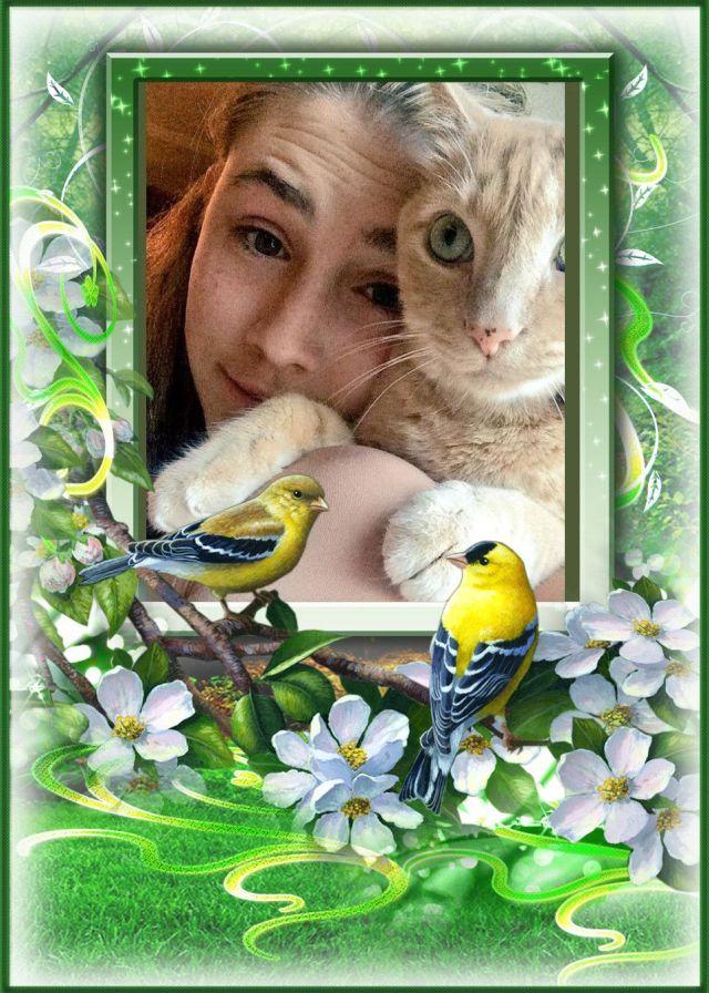 alexa cat and birds
