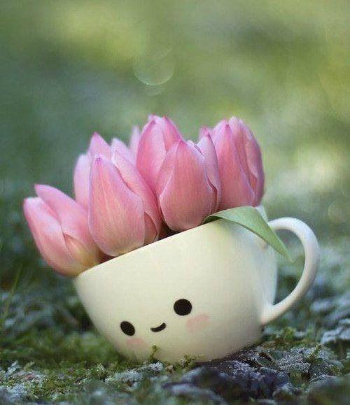 tulipcup