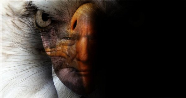 trump eagle 2