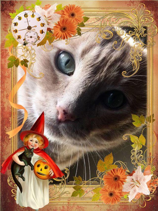 alexas-cat-halloween