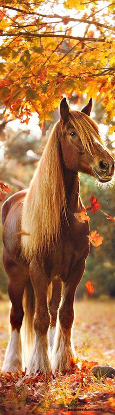 autumn-horse