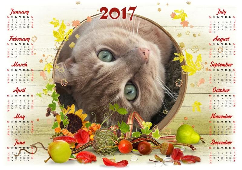 cat-2017