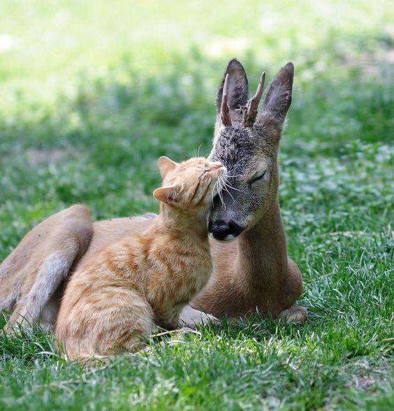 cat-and-deer