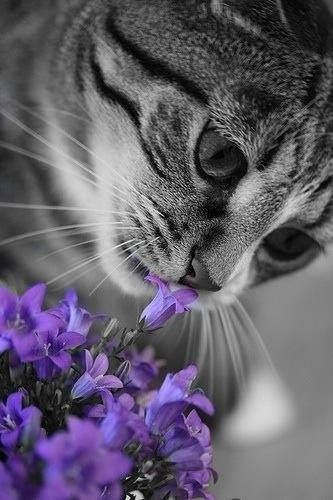cat-and-flowers