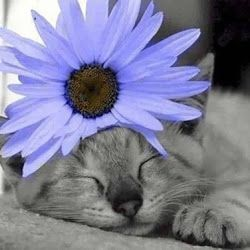 cat-with-purple-flower