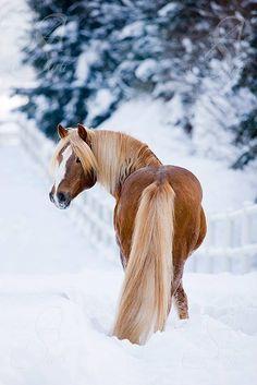 horse-in-snow