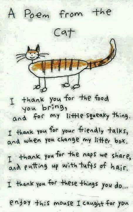 poem-from-the-cat