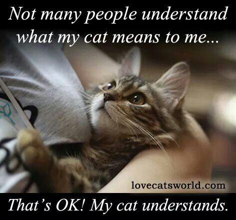 cat-understands