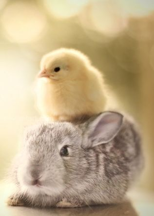 bunny and chick on head