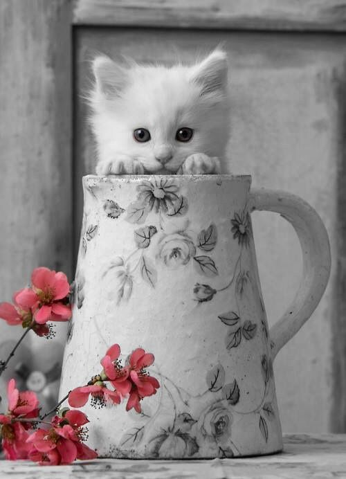 cat n cup