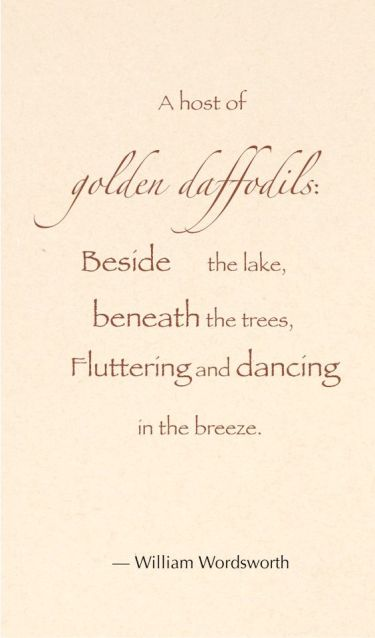 daffodilsfluttering