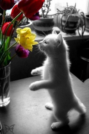kitty and yellow flower