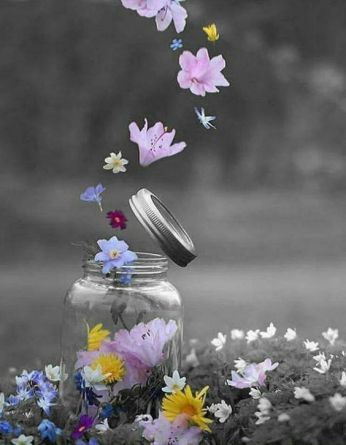 splash of flowers